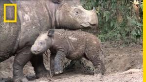 NEWS.RhinosFaceExtinctionAsChristiansFaceFacts.NationalGeographic